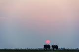 A Pair of African Elephants Grazing on a Wetland Island Beneath the Setting Sun