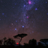 The Southern Cross and Milky Way over a Tree the Carina Nebula Is the Red Cloud at Top