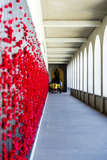 School Children View the Roll of Honour Where Fallen Soldiers are Remembered with Red Poppies