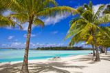 Palm Trees  Lounge Chairs  and White Sand on a Tropical Beach