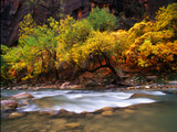 A River Rushing Past Tall Cliffs and Trees in Autumn Hues