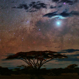 The Milky Way and Planet Venus over an Acacia Tree in the Evening