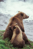 A Grizzly Bear Cub Nuzzles its Mother by a Waterfall
