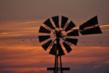 A Silhouetted Windmill and a Flock of Migrating Sandhill Cranes at Sunset