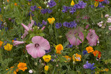 Close Up of a Variety of Flowers in a Wildflower Garden