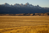A Field of Golden Grass in Grand Teton National Park