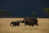 A Small Family of Elephants Moves across the Plains of the Serengeti