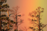 A Pair of Bald Eagles  Haliaeetus Leucocephalus  Illuminated by a Rainbow While Perched in a Tree