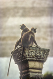 Gray or Hanuman Langurs Rest on Column Capital Near Ruvanveliseya Dagaba