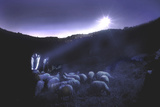 Shepherds Tend to their Flocks Beneath the Light from a Bright Star