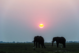 A Pair of African Elephants Grazing on a Grass Island in a Wetland at Sunset