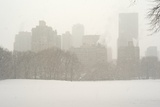 Manhattan Buildings and Trees in Central Park During a Blizzard