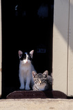 Two Young Cats Resting in a Doorway