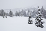 Snowfall in Wyoming's Gros Ventre Wilderness Area