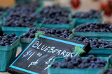 Bins of Organically Grown Maine Blueberries Displayed for Sale at the Maine Organic Farmers' Market