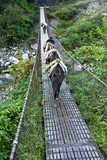 A Villager Crosses a Suspension Bridge Between Mountains with His Pack Mule Train