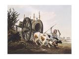 Water Wagon  Argentina 19th Century