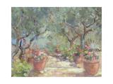 Garden in Porto Ercole  Italy  1996