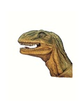 Illustration of Allosaurus  Close Up of Head