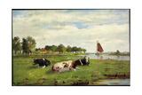Künstler Kühe Auf Der Wiese Am Flussrand  Segelboot