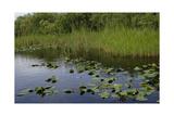 United States  Everglades National Park  Florida