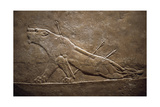 Wounded Lion Assyrian Relief from Palace at Niniveh