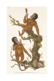 Two Primates on a Tree  1823