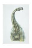 Brontosaurus  Jurassic Period