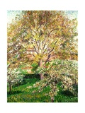 Trees in Bloom at Eragny  1895