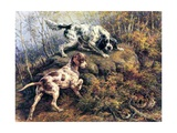 Pointer  Setter and Grouse