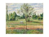 Meadow with Grey Horse  Eragny  1893