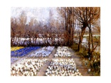 A Crocus Field in Spring  C1889