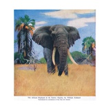 African Elephant in His Native Haunts