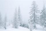 Val Travignolo in Snow