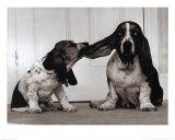 Lend Me Your Ear