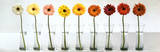 Gerbera Spectrum