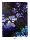 Water Lilies and Agapanthus  1914-1917