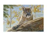 Front Range Cougar