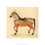 Horse from India I