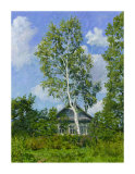 Birch Tree Near Dwelling