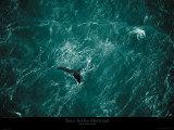 Baleine Reproduction d'art par Yann Arthus-Bertrand