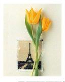 Tulip  Euro-Floral