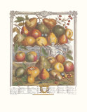 Twelve Months of Fruits  1732  January