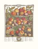 Twelve Months of Fruits  1732  August