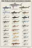 World's Most Dangerous Sharks