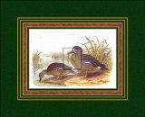 Ducks III
