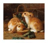 Le déjeuner du lapin I Reproduction d'art par Alfred Barber