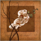 Golden Orchid II