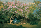 Blossoming Lilac in the Sun  c1873