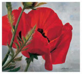 Red Poppy